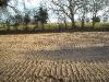 Gravel Pit Allotments - 9 Dec 2011