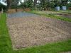sweetcorn rows planted