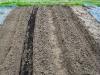 Asparagus beds - preparation