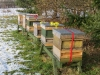 beehives-in-feb-2015-3