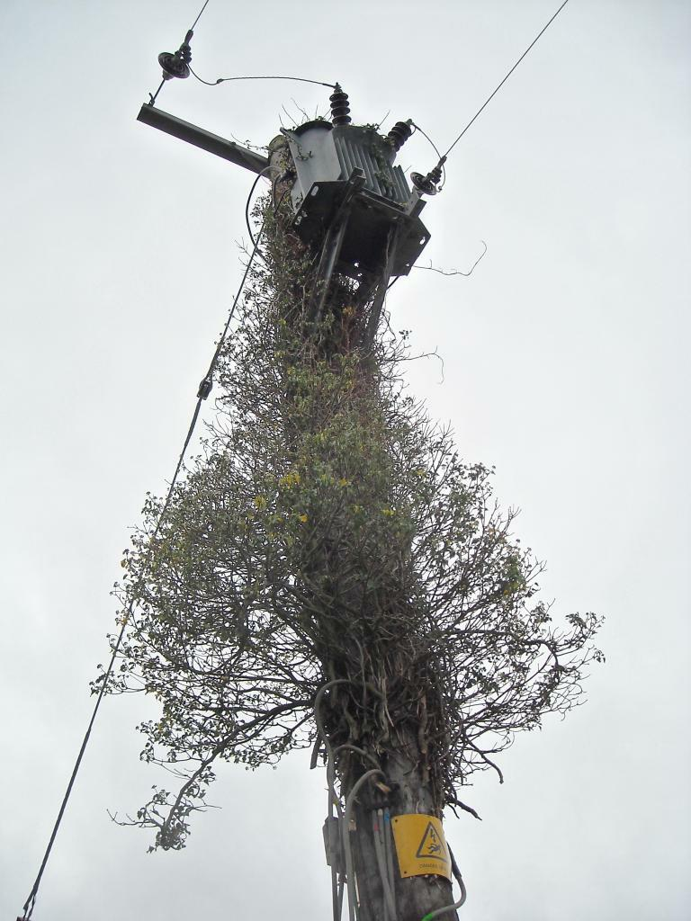 Transformer for the shire, still covered in Ivy No.2