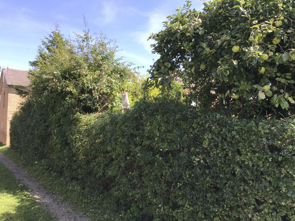 hedge-003
