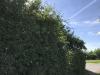 hedge-004
