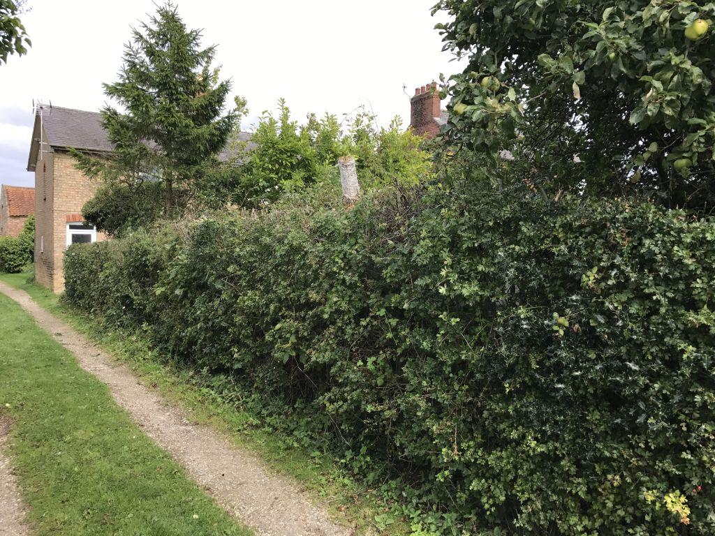 hedge-017
