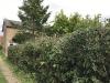 hedge-018