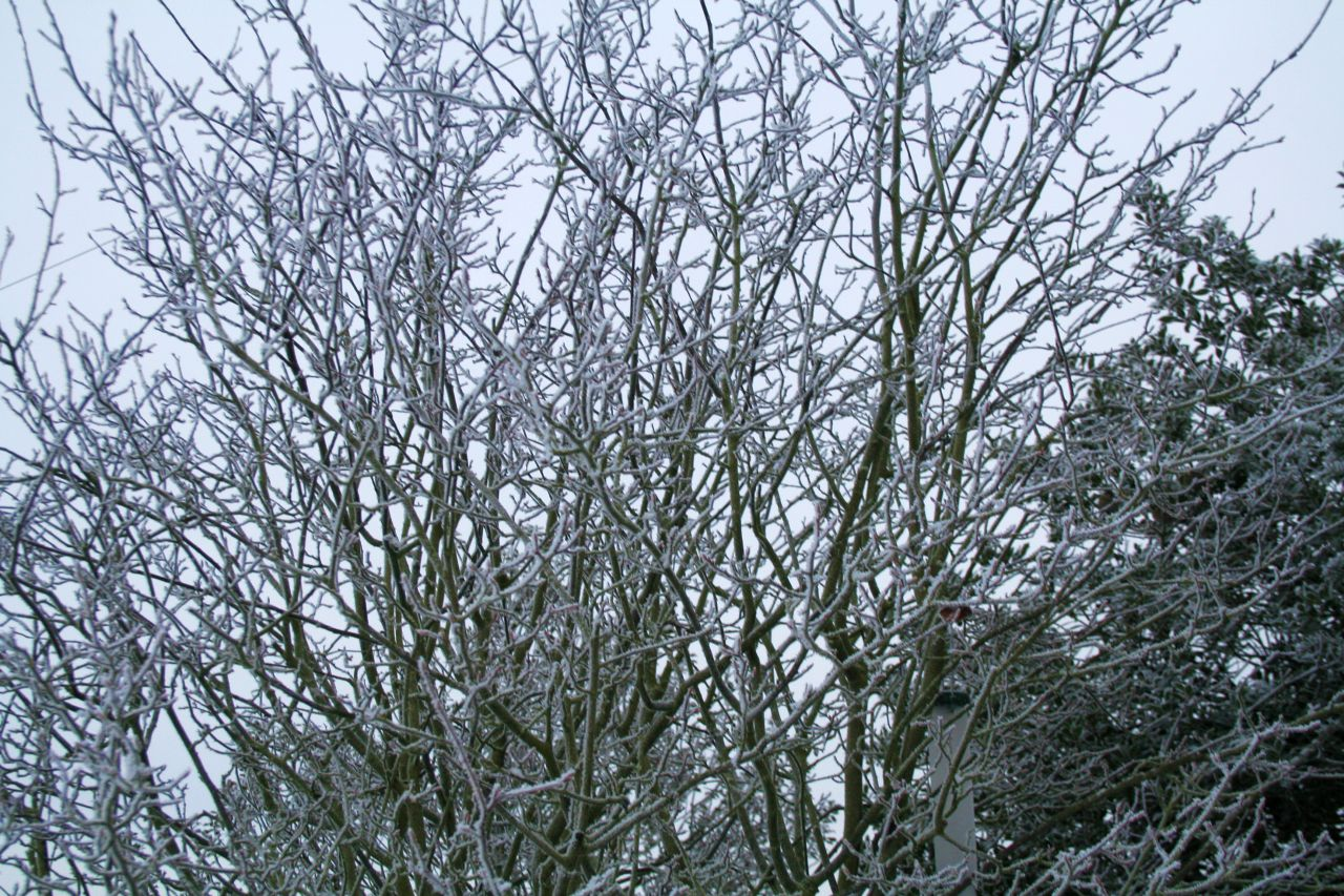 trees on the frosty day