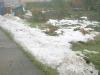 Snow thaws out - back garden