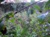 brambles and nettles