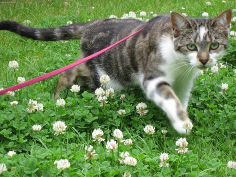 Tilda in the clover