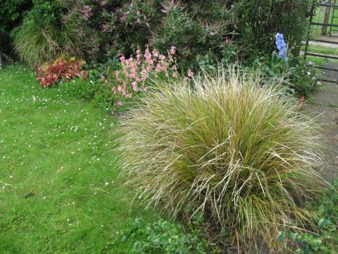 front-garden-border1-2009