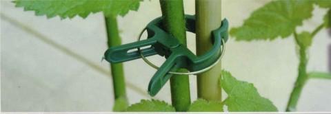 plantclip3