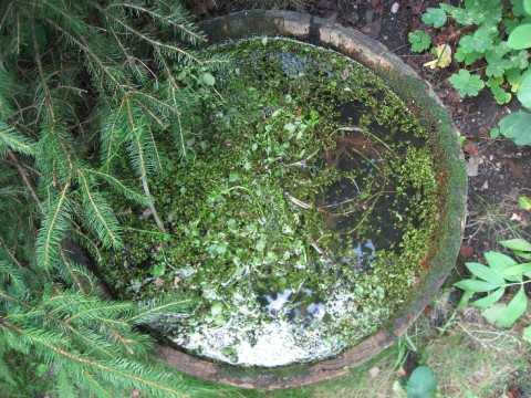 my old water feature