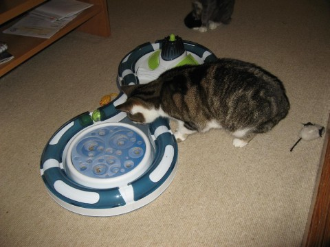 cats-new-toy1-tilly