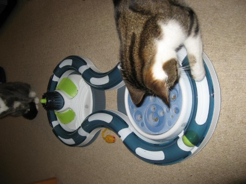 cats-new-toy3-tilly