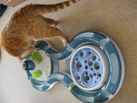 cats-new-toy4-angus