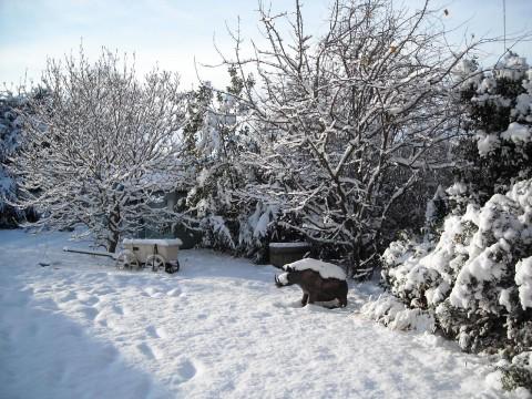 snoweygarden2