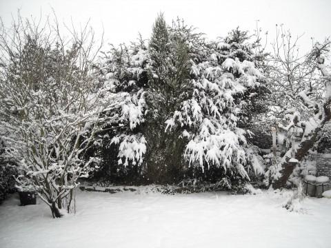 snoweygarden3