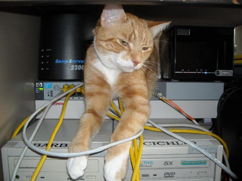 Angus sits on top of HP 1810G-24 network switch