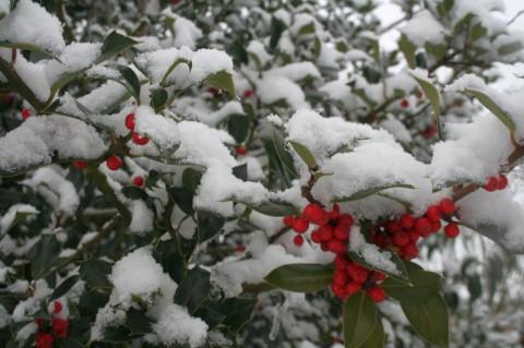 snow-in-winter08-jpg