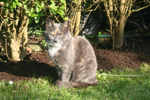 Esther by the new privet hedge border