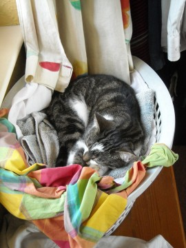 Tilly in washing basket