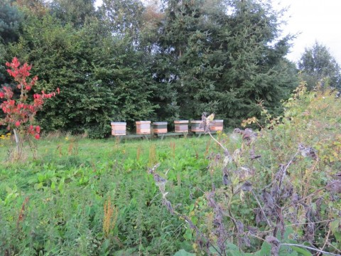 Andysworld! Secret Apiary