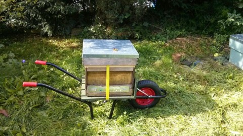 Hive on the move, on my hive barrow (I built!)