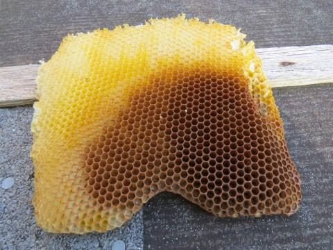 """wild"" comb made from pure beeswax"