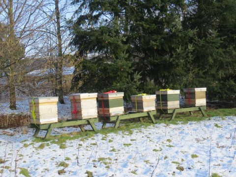 beehives-in-feb-2015-1