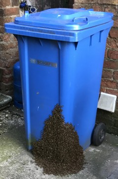 swarm of honey bees on recycle bin