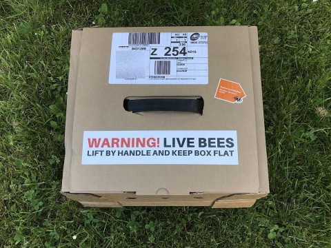 Delivery box of bumble bees