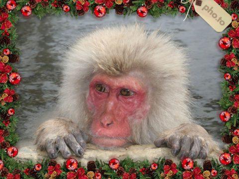 Christmas Festive Monkey