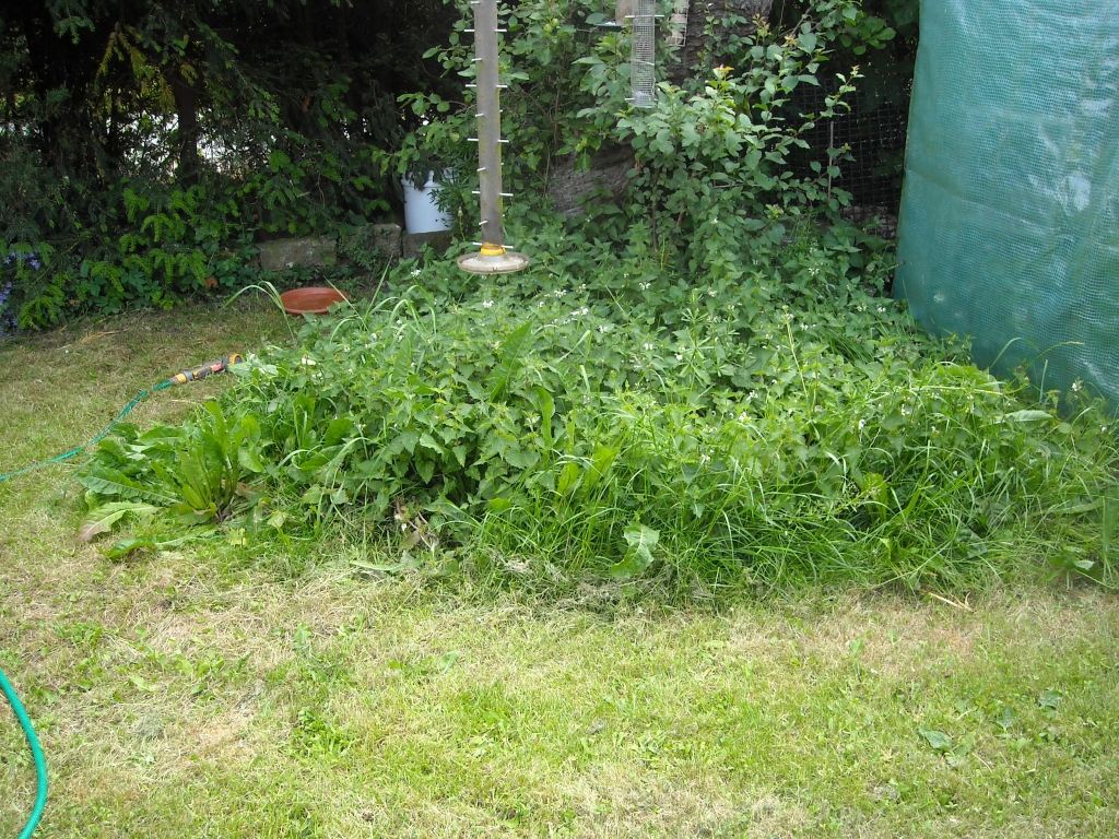 Biodeiversity at the bottom of the garden