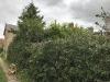 hedge-008