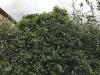 hedge-011