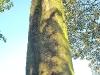 Pre-historic monolith