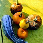 Worlds smallest pumpkins!