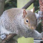 Squirrel nutkins!